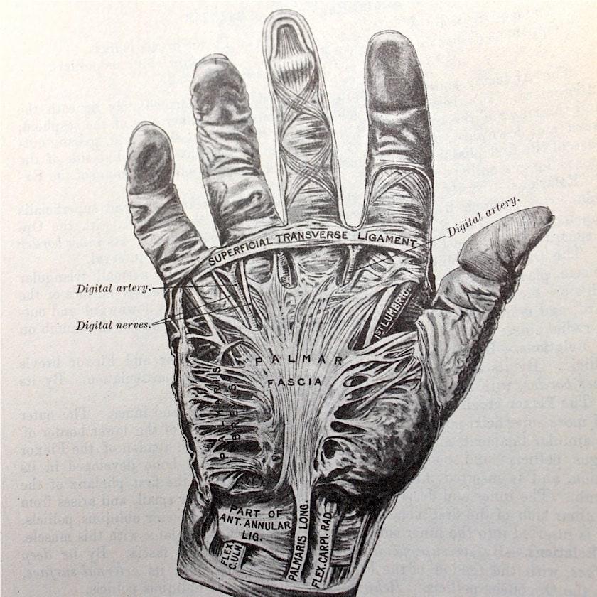 Vintage Anatomical Drawing Vintage Medical...
