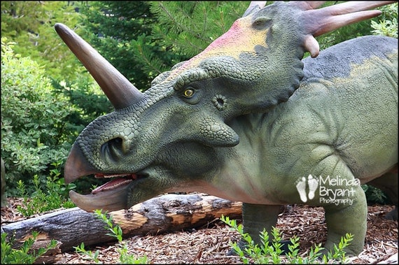 "Dinosaur Art Print Boys Room Decor --  Styracosaurus 10x15"""