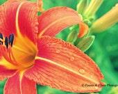 Photo Greeting Card, 5 X 7, Orange Lily