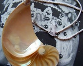 SALE Chambered Nautilus Shell Pendant Necklace