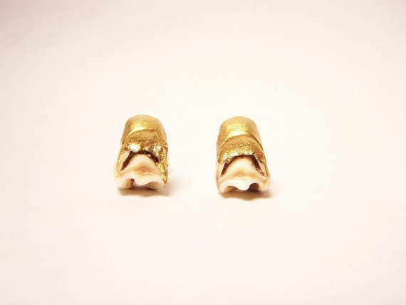 Gold Dipped Deer Tooth Studs