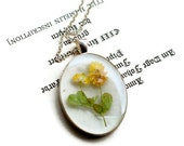 RESERVED ON SALE pressed wildflower  yellow golden flowers from my farmhouse cottage woodland fall boho