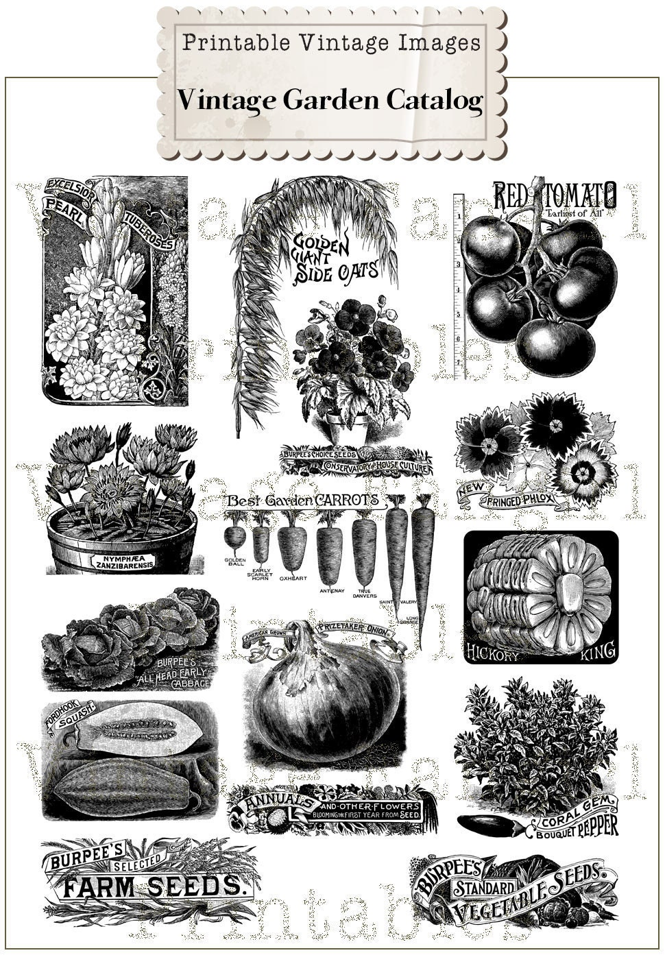 New Vintage Garden Seed Catalog Clip Art Collection 100