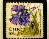 """Irish """"Butterwort flower"""" postage stamp fridge magnet"""