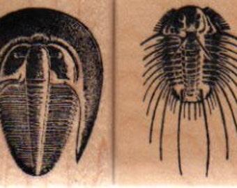 Fossil Trilobite Rubber Stamps: Harpes & Acidaspis