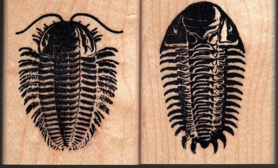 Triarthrus & Cheirurus Trilobite Rubber Stamps