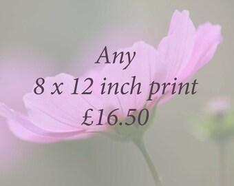8 x 12 print price