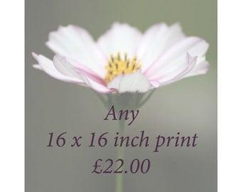 16 x 16 print price