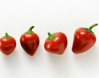 Organic Heirloom 200 Seeds Hot Cherry Bomb Peppers Pepper Chili Large Red Heirloom Vegetable F04