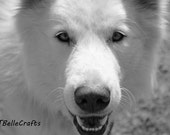 Kiba - Photography, Matted For Framing