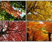 Autumn Photograph Leaves Fall Foliage Red Yellow Orange Changing Leaves - Set of four 5x7 prints matted to 8x10 ready to frame