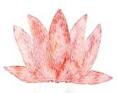 Lotus Flower Art Print - Archival Print - Watercolor Painting Art