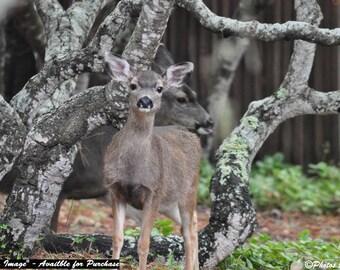 Deer Raspberry