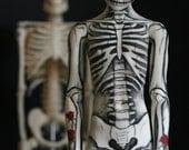 Skeleton boy Ball Joint Doll BJD postcard