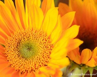 Flower Photography - Sunflower Photograph - Fall - Bright - Sunflowers - Flower Photo - Fine Art Photography Print - Yellow Home Decor
