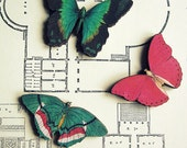Wood Butterfly Brooch Illustration