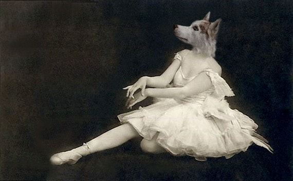 Pavlova - Ballerina Dog Photo - 5x7 Vintage Animal Print - Altered Photo - Anthropomorphic - Collage Art - Siberian Husky
