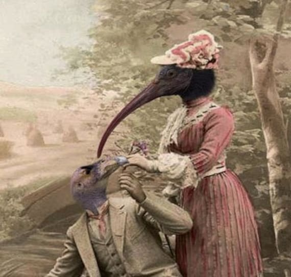 Mrs. Longbeak - Vintage Bird 5x7 Print - Anthropomorphic - Altered Photo - Animal Print - Collage Art - Photo Collage - Funny Animal Photo