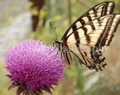 Purple Flower with Butterfly Fine Art Nature Photograph 5x7