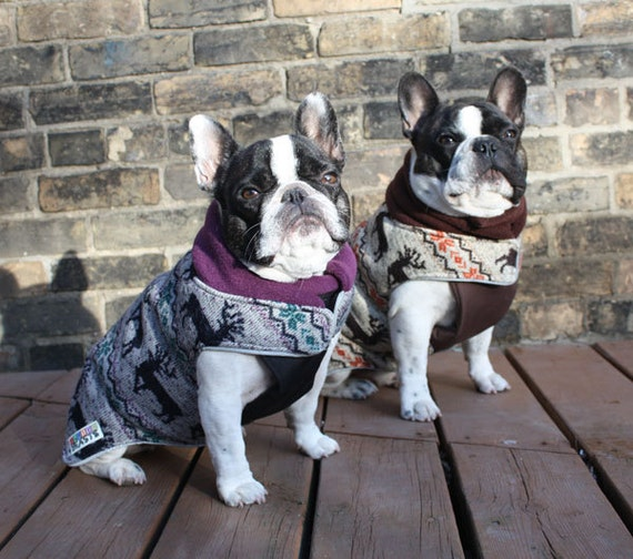 items similar to the latch - adult french bulldog  pug winter dog coat