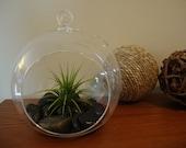 Air Plant Glass Terrarium-  Tillandsia with River Stones