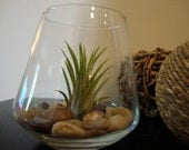 Air Plant with Natural Colored Stones