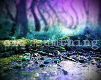 neverland forest photograph 5x7