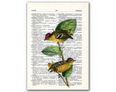 Birds of Brasil, vintage illustration printed on Upcycled English Dictionary page. Buy 3 and get 1 FREE