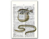 Fish and Eel, vintage illustration printed on Upcycled English Dictionary page. Buy 3 and get 1 FREE