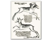 Two headed deer, vintage illustration from year 1603 printed on parchment paper