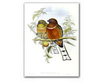 Birds in Love, vintage illustration printed on Parchment paper. Buy 3 and get 1 FREE