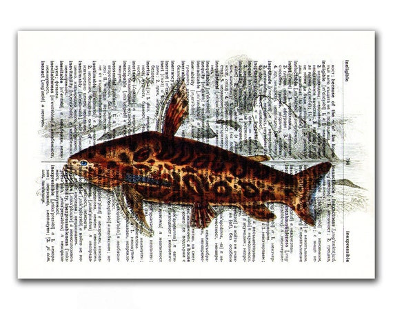 Fishes of Guiana, vintage illustration printed on Upcycled English Dictionary page. Buy 3 and get 1 FREE