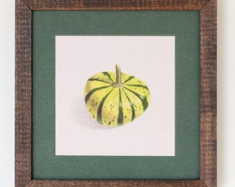 Gourd Drawing: Striped yellow-green mini gourd in Prismacolor pencils in handmade frame