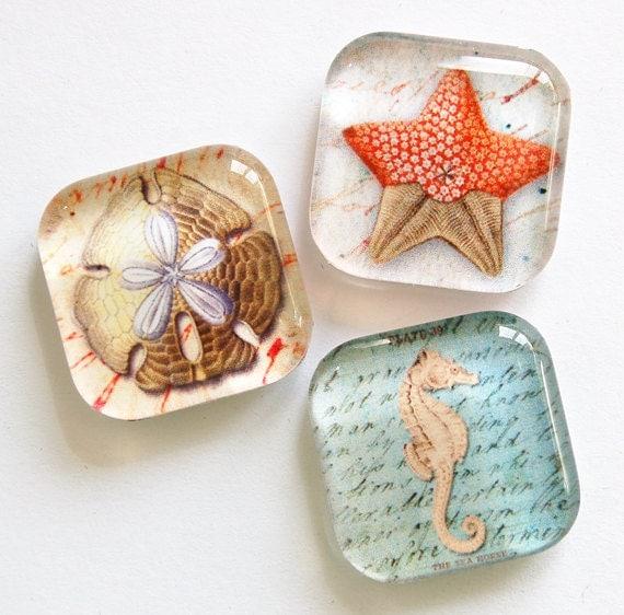 Beach Magnets, Fridge Magnets, Glass Magnets, Glass Beach Magnets, Seahorse, sand dollar, shells (798)