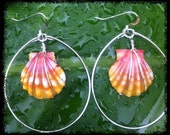 RARE Sunrise Shell Sterling Silver Hoop earrings