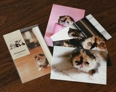 Baby cat Meme (5pack) postcard -A