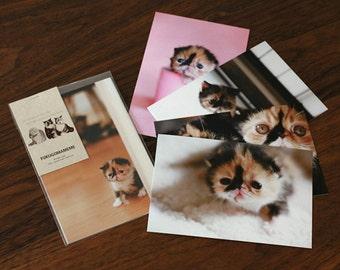 Baby cat Meme (5pack) postcard -A