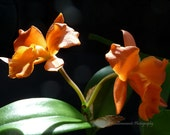 The Orchid couple