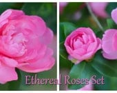 Ethereal Roses - Set of two 5x5 Fine Art Photographs (also available in larger sizes)
