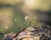 Mushroom photo, nature Photo, woodland photo, autumn, Bokeh Effect, Dappled -  fine art photograph