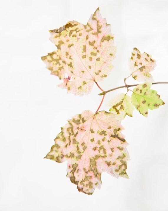 Woodland photo, leaf photo, nature photo, Pink and green, autumn photo - 8x10 fine art photograph