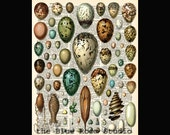 Vintage Dictionary page Natural History Eggs print 3