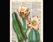 Vintage Dictionary page Natural History Cactus Plant print 26