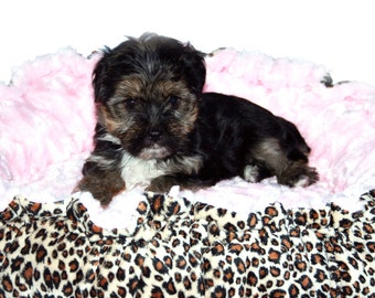 Minky Couture Pet Bed Leopard Print Powder Pink