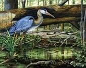 "Great Blue Heron 8"" x 10"" Archival Art Print"