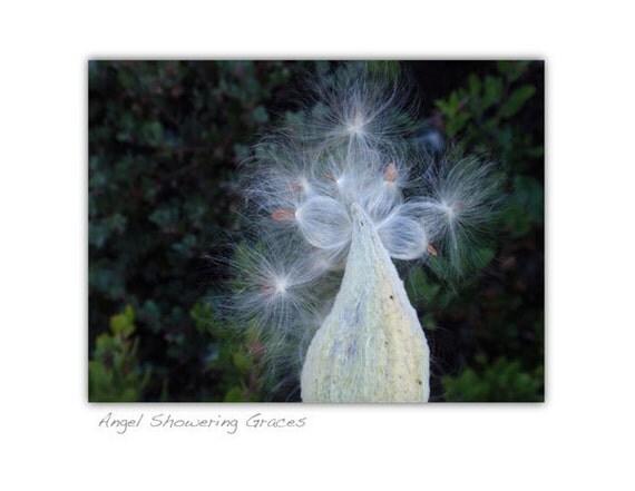 Angel Showering Graces