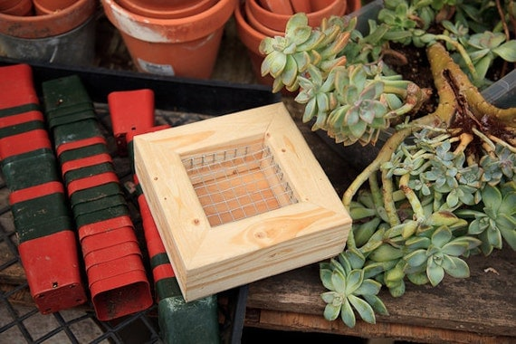 4x4 Succulent Frame Unfinished