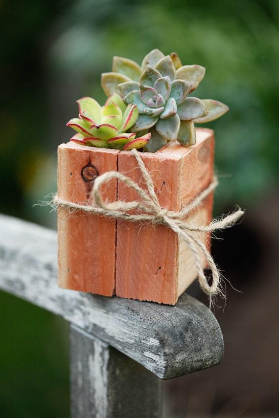 "3x3"" Succulent Planter Box - Redwood - great for centerpieces."
