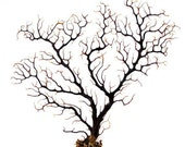 Black Sea Tree (12.5X13.5 in) - soft coral,nautical decor, seashells background