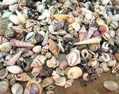 Tiny Seashells Mix